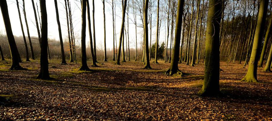 Kölnpfad Etappe 6 Wald