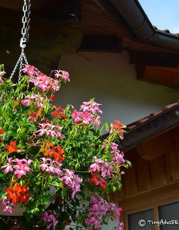 Grünbach Blumen