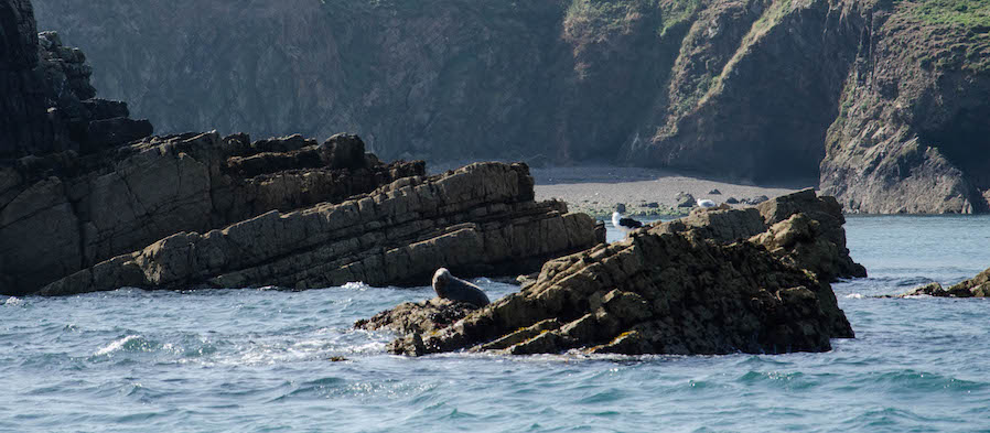 Robbenbabys Wales