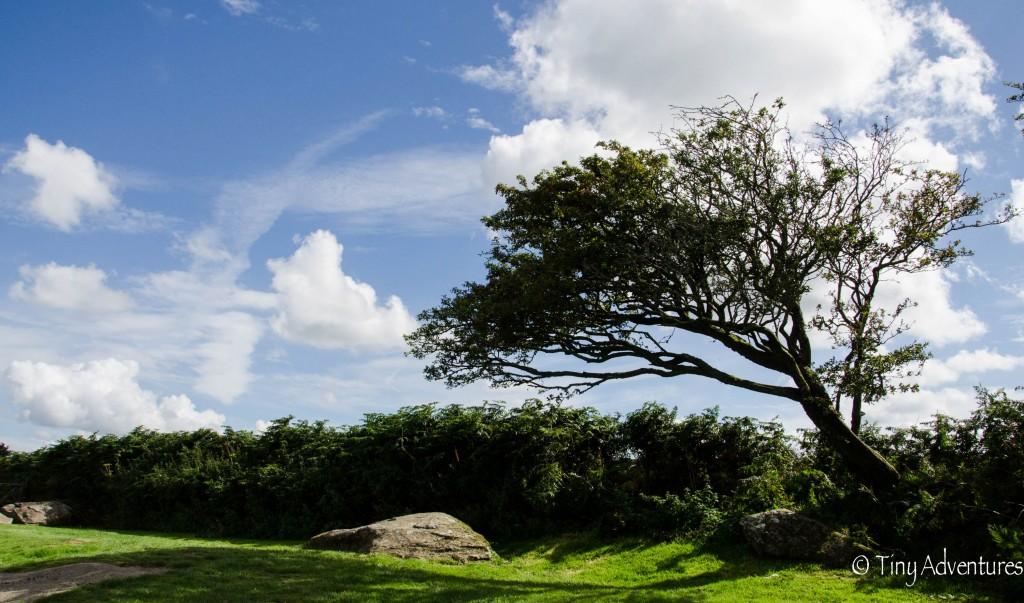 Landschaft Baum