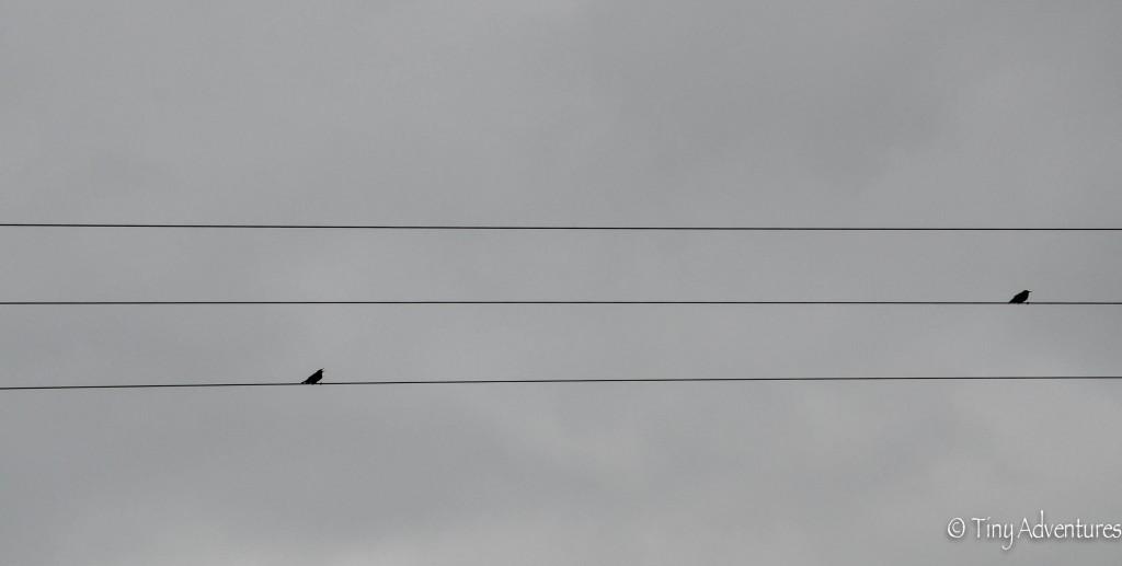 Naafbachtal Vögel