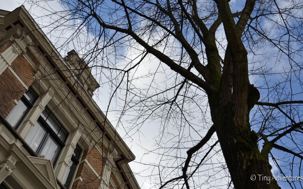 Amsterdam Haus Baum